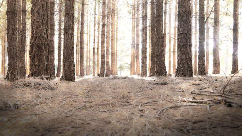 woods-841417__480