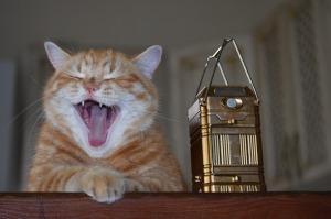 Ginger cat Pixababy Skorchanov